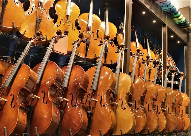 常時20本以上のチェロを展示販売。お取り寄せ試奏も承ります 島村楽器みなとみらい店