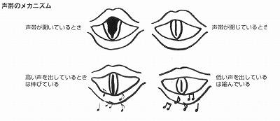 声帯のメカニズム